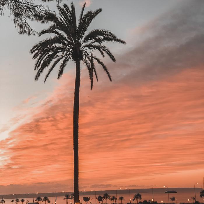 Sunrise Palm tree Palma de Mallorca