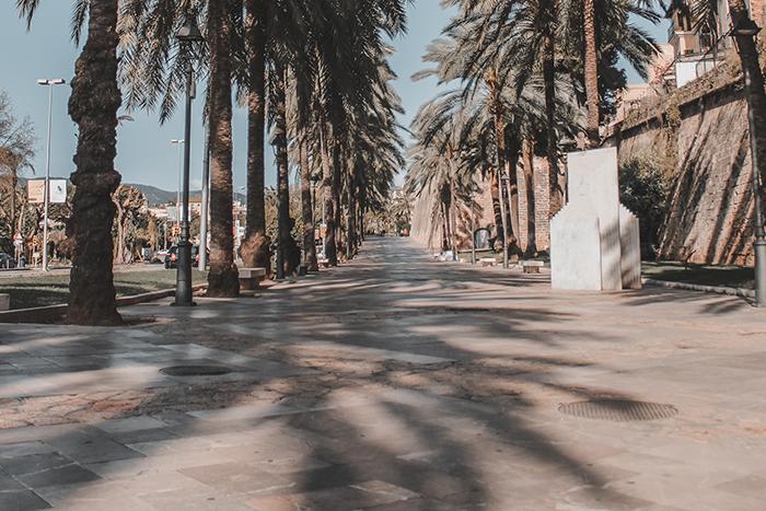 Empty Palma de Mallorca during lockdon palmtree shadows