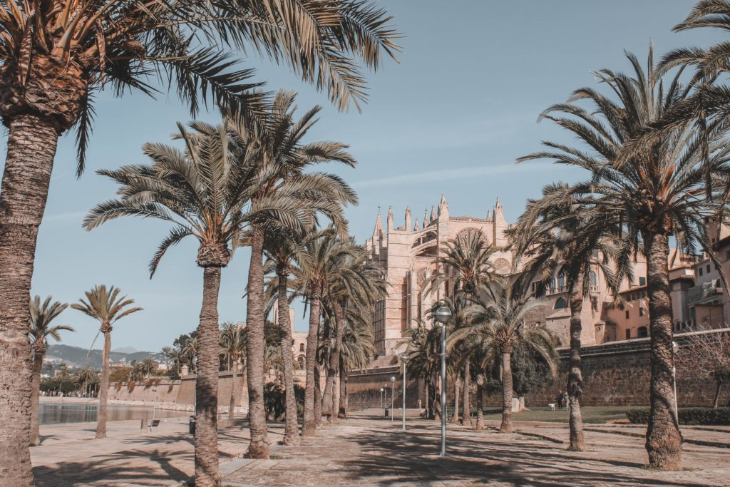 Palma Cathedral and palmtrees