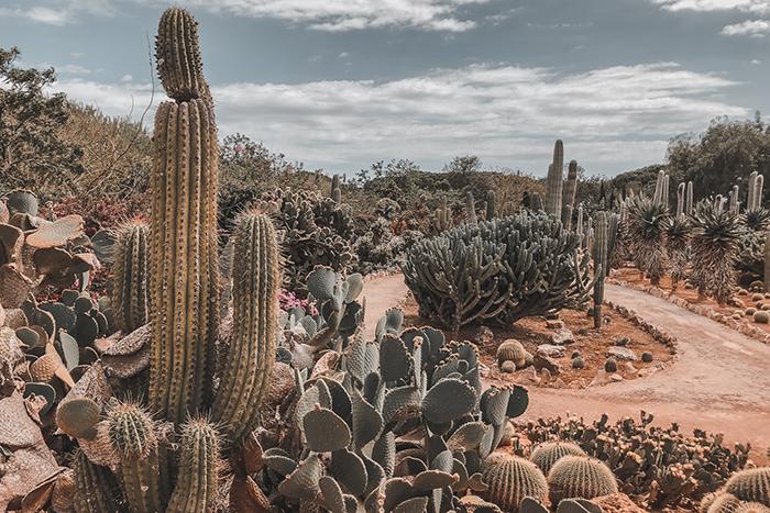 cactus garden Mallroca botanicactus