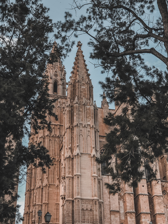 Palma cathedral with trees