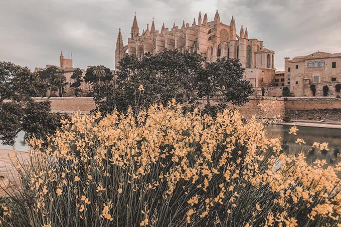 Palma cathedral La Seu with flowers Spring